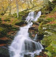 Birks of Aberfeldy, Tayside, Scotland, UK, Europe 20025361202| 写真素材・ストックフォト・画像・イラスト素材|アマナイメージズ