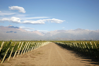 Vineyards and the Andes mountains in Lujan de Cuyo, Mendoza, Argentina, South America 20025361361| 写真素材・ストックフォト・画像・イラスト素材|アマナイメージズ