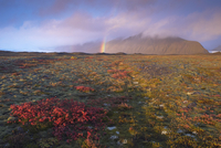 Autumn colours and rainbow over Illuklettar near Skaftafellsjokull glacier seen in the distance, Skaftafell National Park, East 20025361529| 写真素材・ストックフォト・画像・イラスト素材|アマナイメージズ