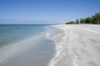 Beach covered in shells, Captiva Island, Gulf Coast, Florida, United States of America, North America