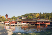 Pagoda and shrine buildings, Itsukushima Shrine, UNESCO World Heritage Site, Miyajima Island, Hiroshima prefecture, Japan, Asia 20025361664| 写真素材・ストックフォト・画像・イラスト素材|アマナイメージズ