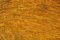 Detail of hay bale, Crete Senesi, Siena province, Tuscany, Italy, Europe 20025362378  写真素材・ストックフォト・画像・イラスト素材 アマナイメージズ