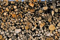 Wood detail, Tuscany, Italy, Europe 20025362626  写真素材・ストックフォト・画像・イラスト素材 アマナイメージズ