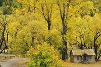 Miner's cottage, Arrowtown, Otago, South Island, New Zealand, Pacific 20025362775| 写真素材・ストックフォト・画像・イラスト素材|アマナイメージズ