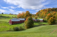 Autumn foliage surrounding red barns at Jenne Farm in South Woodstock, Vermont, New England, United States of America, North Ame