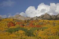 The Dyke with the fall colours, Grand Mesa-Uncompahgre-Gunnison National Forest, Colorado, United States of America, North Ameri 20025364055| 写真素材・ストックフォト・画像・イラスト素材|アマナイメージズ