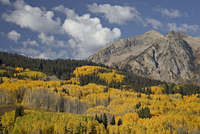 Yellow aspens and evergreens in the fall with rocky mountain, Grand Mesa-Uncompahgre-Gunnison National Forest, Colorado, United