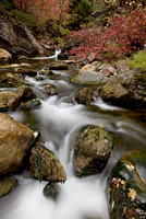 Cascades on Peteetneet Creek with red maples in the fall, Nebo Loop, Uinta National Forest, Utah, United States of America, Nort 20025364111| 写真素材・ストックフォト・画像・イラスト素材|アマナイメージズ