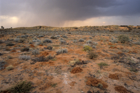 Rain clouds over Kalahari Desert in August, Kalahari-Gemsbok National Park, part of Kgalagadi Transfrontier Park, South Africa,