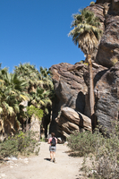 Hiking in Andreas Canyon, Indian Canyons, Palm Springs, California, United States of America, North America