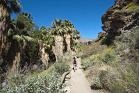 Hiking in Andreas Canyon, Indian Canyons, Palm Springs, California, United States of America, North America 20025364353| 写真素材・ストックフォト・画像・イラスト素材|アマナイメージズ