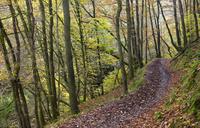 Footpath through autumnal woodland above the Nedd Fechan River near Pontneddfechan, Brecon Beacons National Park, Powys, Wales, 20025364461| 写真素材・ストックフォト・画像・イラスト素材|アマナイメージズ