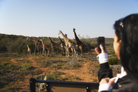 Woman photographing giraffes, Addo Elephant Park, Eastern Cape, South Africa, Africa 20025364562| 写真素材・ストックフォト・画像・イラスト素材|アマナイメージズ