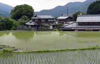 Newly planted rice seedlings in a flooded rice paddy in the rural Ohara village of Kyoto, Japan, Asia 20025364889| 写真素材・ストックフォト・画像・イラスト素材|アマナイメージズ