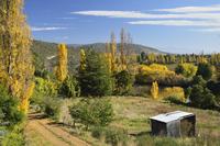 Countryside in fall, Derwent Valley, near New Norfolk, Tasmania, Australia, Pacific 20025365757| 写真素材・ストックフォト・画像・イラスト素材|アマナイメージズ