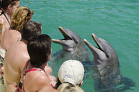 Dolphin encounter in Buena Vista UNESCO Biosphere Reserve, Buena Vista Bay, Cayo Santa Maria, Cuba, West Indies, Caribbean, Cent 20025366221| 写真素材・ストックフォト・画像・イラスト素材|アマナイメージズ