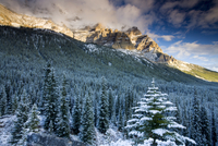 Snow covered pine forest backed by soaring Rocky Mountains, Banff National Park, UNESCO World Heritage Site, Alberta, Canada, No