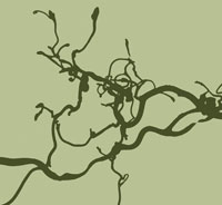 西洋ハシバミ