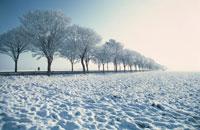 雪の積もった大地と木