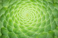 植物(明鏡)