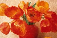 チューリップ 20026001285| 写真素材・ストックフォト・画像・イラスト素材|アマナイメージズ