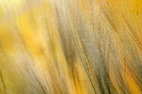 タカノハススキ 20026001608| 写真素材・ストックフォト・画像・イラスト素材|アマナイメージズ