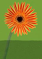 ガーベラ 20026002066  写真素材・ストックフォト・画像・イラスト素材 アマナイメージズ