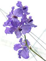 花(シンビジウム)