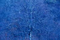 樹木 20026002468  写真素材・ストックフォト・画像・イラスト素材 アマナイメージズ