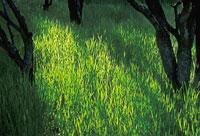 植物 20026002470| 写真素材・ストックフォト・画像・イラスト素材|アマナイメージズ
