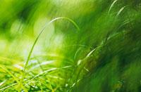 草 20026002497| 写真素材・ストックフォト・画像・イラスト素材|アマナイメージズ