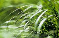 草 20026002498| 写真素材・ストックフォト・画像・イラスト素材|アマナイメージズ