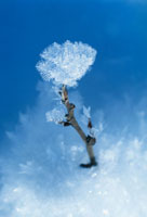 樹木 20026002566  写真素材・ストックフォト・画像・イラスト素材 アマナイメージズ