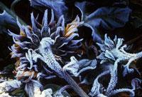 霜がついたひまわり 20026002584| 写真素材・ストックフォト・画像・イラスト素材|アマナイメージズ