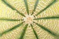 メロン 20026002823  写真素材・ストックフォト・画像・イラスト素材 アマナイメージズ