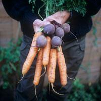 野菜 20026003271| 写真素材・ストックフォト・画像・イラスト素材|アマナイメージズ