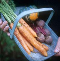 野菜 20026003274| 写真素材・ストックフォト・画像・イラスト素材|アマナイメージズ