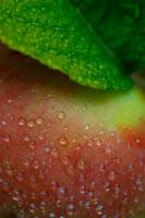 リンゴのアップ