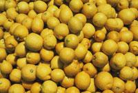 レモン 20026004831  写真素材・ストックフォト・画像・イラスト素材 アマナイメージズ