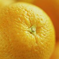 オレンジのアップ