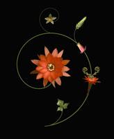 サボテン 20026004919| 写真素材・ストックフォト・画像・イラスト素材|アマナイメージズ