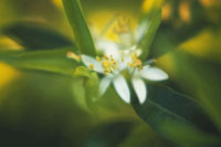 オレンジ 20026004922| 写真素材・ストックフォト・画像・イラスト素材|アマナイメージズ