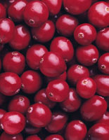 Vaccinium Oxycoccos�CCranberry