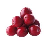 Vaccinium Oxycoccos,Cranberry