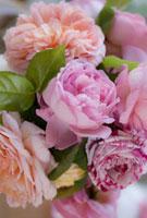 Rose 20026005433| 写真素材・ストックフォト・画像・イラスト素材|アマナイメージズ