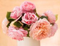 Rose 20026005434| 写真素材・ストックフォト・画像・イラスト素材|アマナイメージズ