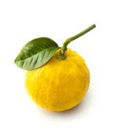 Citrus bergamia�CBergamot - Citrus
