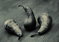 Pyrus communis 'Conference', Pear