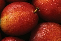 Prunus domestica 'Victoria', Plum