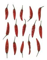 Capsicum annuum, Chilli pepper